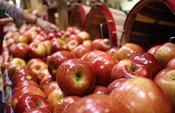 سیب و سرطان ؛ چه باید کرد؟