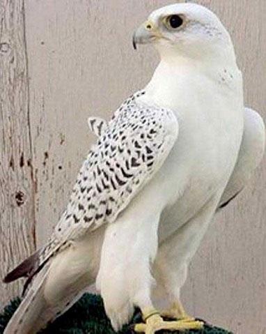 پرنده میلیاردی از قفس پرید (+عکس)