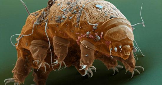 تنها جانداری که در فضا هم زنده می ماند (+عکس)