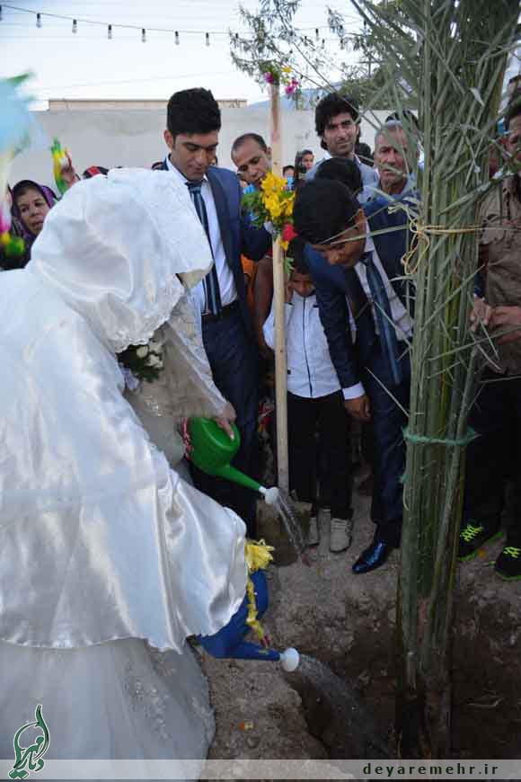 اقدام قابل تحسین 2 زوج در دشتستان (+عکس)