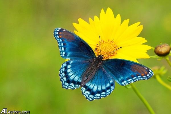 نکاتی برای عکاسی بهتر از پروانهها