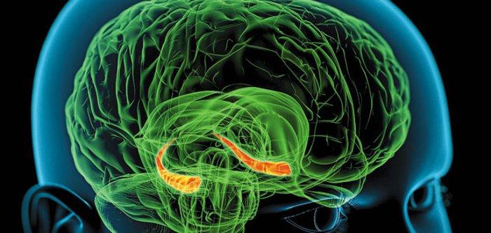 ۱۰ راز حل نشده از مغز انسان