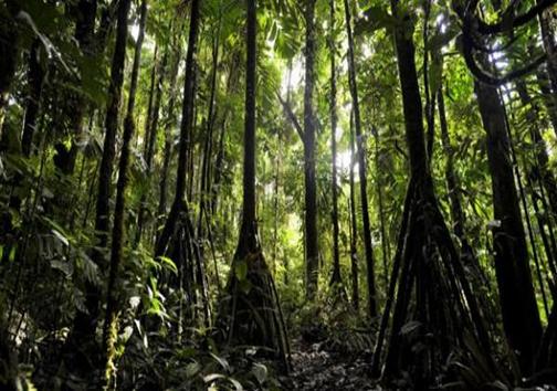 درختانی که راه می روند! (+ عکس)