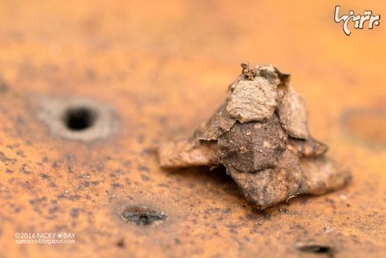 سازه های اسرارآمیز کوچکترین معماران جهان! (عکس)