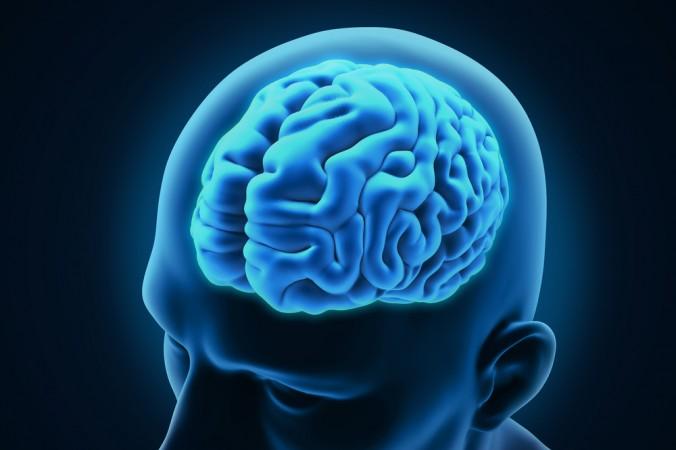 ظرفیت ذخیرهسازی اطلاعات مغز 10 برابر تصورات پیشین