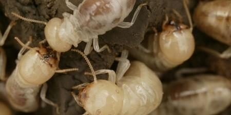 حداقل 10 هزار حشره در خانه شما زندگی میکند