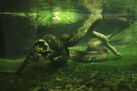 ترسناک ترین موجودات آمازون (+عکس)