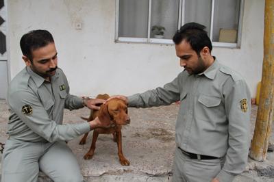 دستگیری عامل ضرب و شتم سگ شکاری