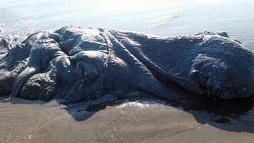 کشف موجود غول پیکر در سواحل مکزیک (عکس)