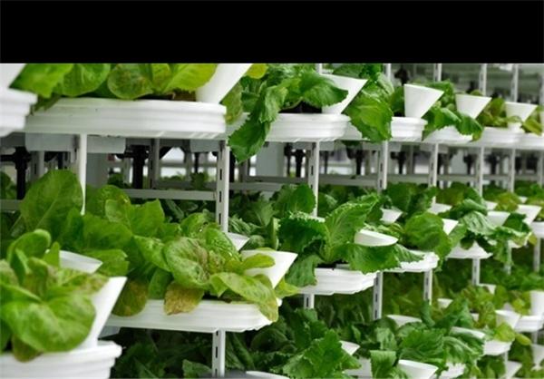 تولید انرژی بیشتر از مصرف در کشاورزی شهری