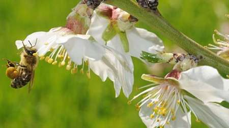 خطر انقراض گونه های زنبور و پروانه