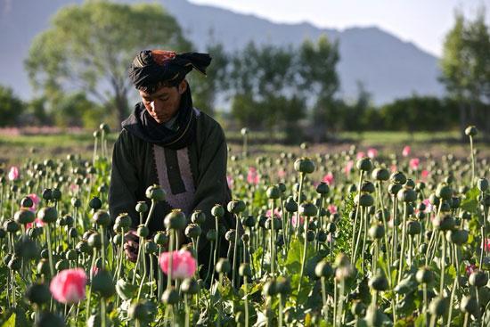 عکس های جنگ در افغانستان