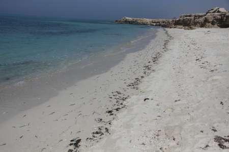 مرگ هزاران ماهی در جزیره کیش