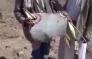 حوثی ها: جنگنده مراکشی را زدیم (+فیلم)