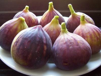 میوهها مفیدترین منابع تغذیه