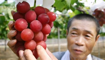 قیمت انگور خواص انگور
