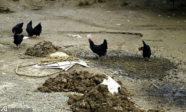 چین برای کمک به پیش بینی زلزله از حیوانات کمک می گیرد