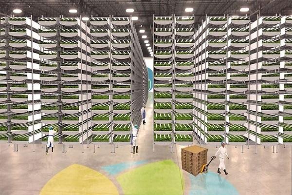 ساخت بزرگترین مزرعه عمودی خانگی در جهان