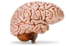 شناخت مغز انسان: گام نخست موفقیت فردی ، ارتباطات اجتماعی و کسب و کار