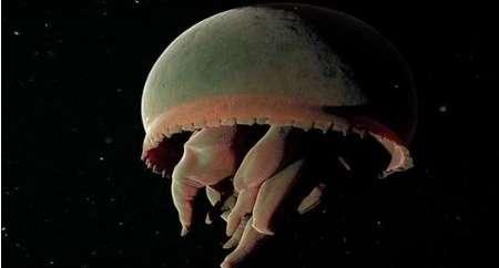ناشناختههای تاریک خانههای اقیانوسی