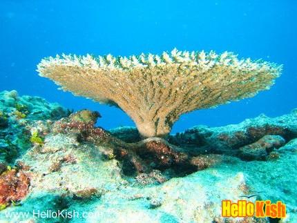 جزیره کیش جزیره مرجانی