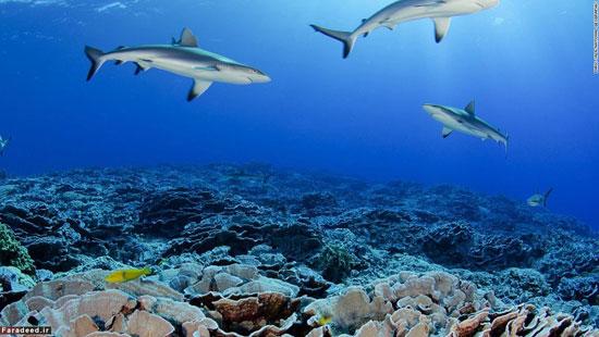 10 ذخیرهگاه طبیعی در جهان (+عکس)