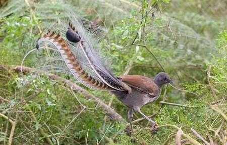برخی از خارق العادهترین حیوانات زمین