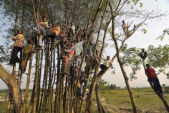 از درخت بالا بروید تا ذهنتان قوی شود!