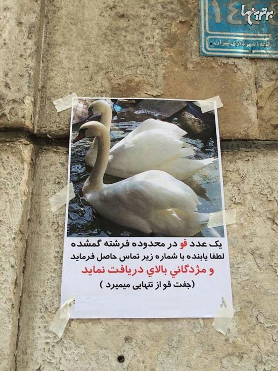 یک گمشده متفاوت در شمال تهران! (عکس)