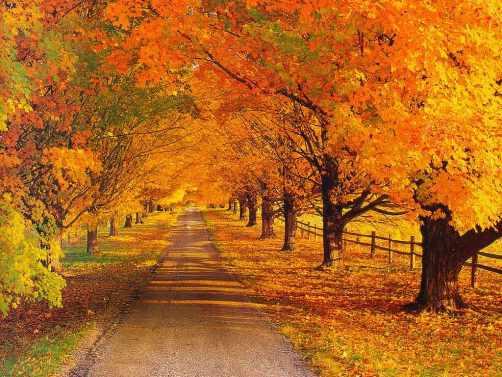 جلوه های زیبای پاییز (+عکس)