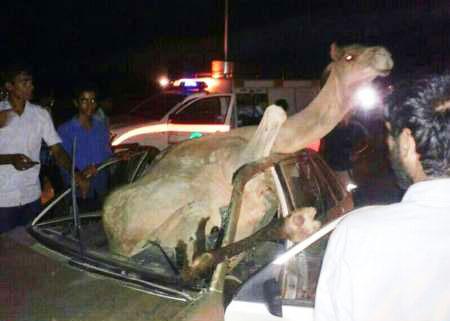 تصادف شتر با پراید باعث کشته شدن راننده پراید شد(+عکس)