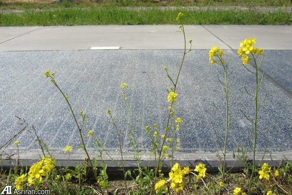 مسیری خورشیدی که بیش از انتظارات انرژی تولید می کند