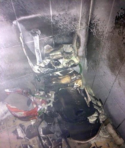 سوسکی که موجب انفجار شد (+عکس)