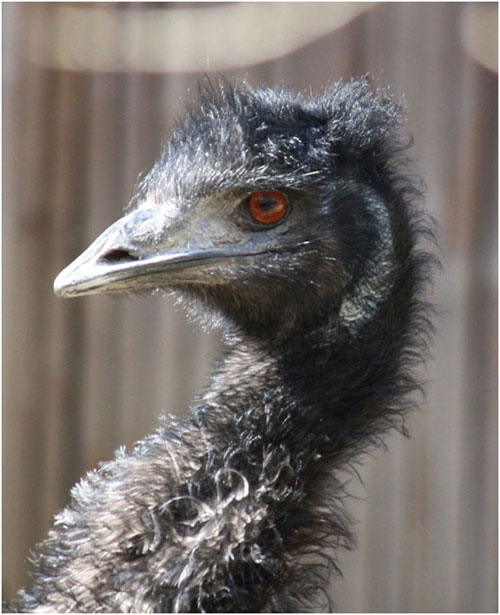 عجیبترین حیوانات استرالیا (+عکس)