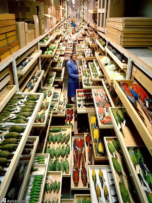 نگاهی به اتاقهای پنهان موزه اسمیتسونین