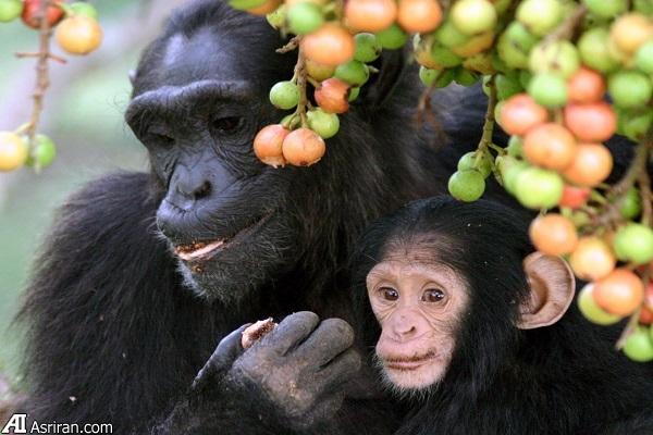 باورهایی اشتباه درباره حیوانات