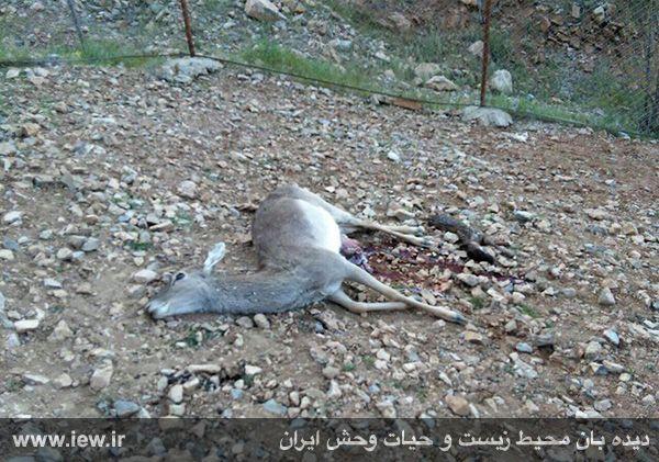 تصاویر تکان دهنده از فاجعه باغ وحش خرم آباد