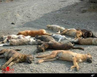 کشتن 20 سگ در تبریز (+عکس)