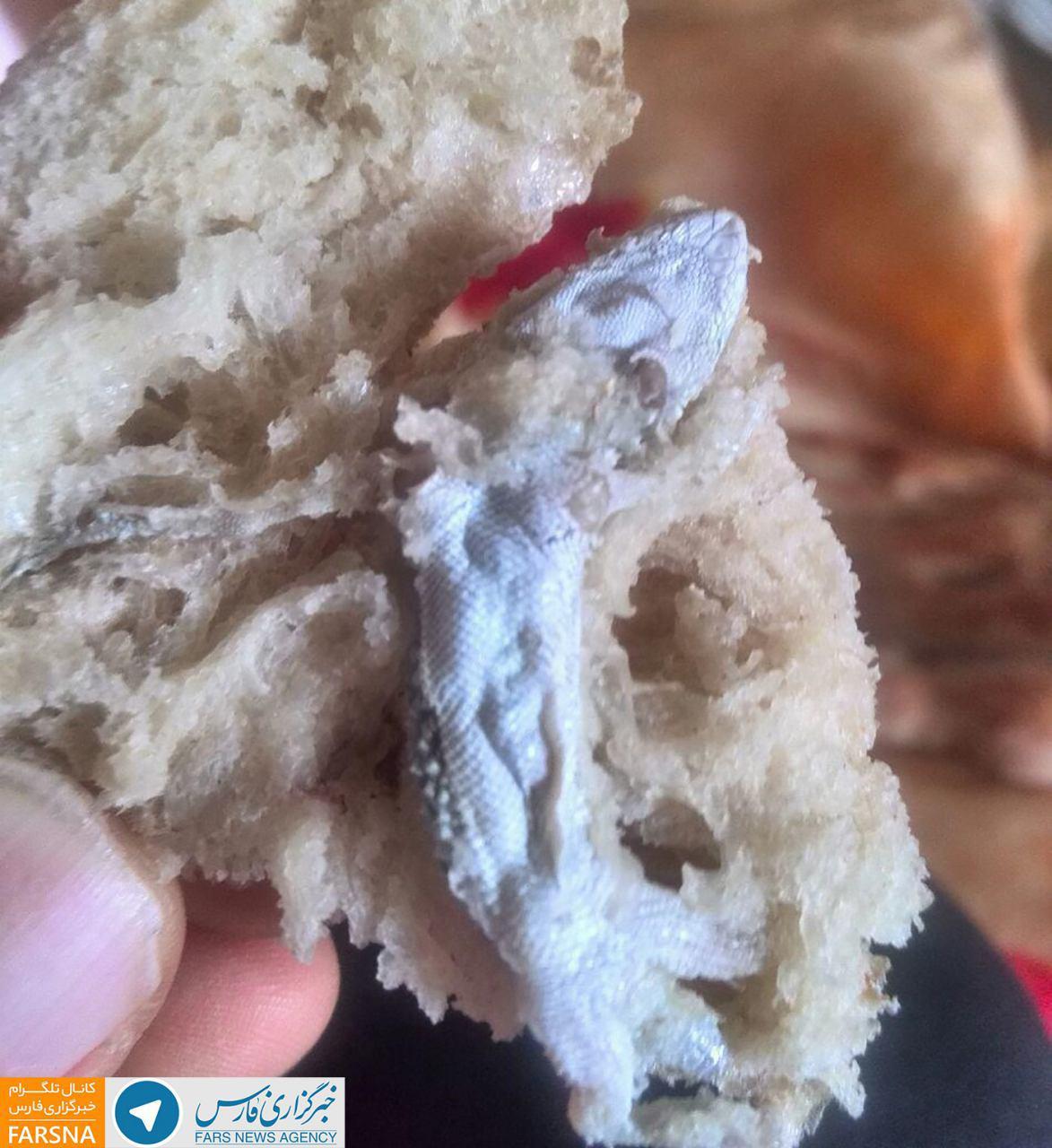 پخت نان با چاشنی مارمولک در مازندران (+عکس)