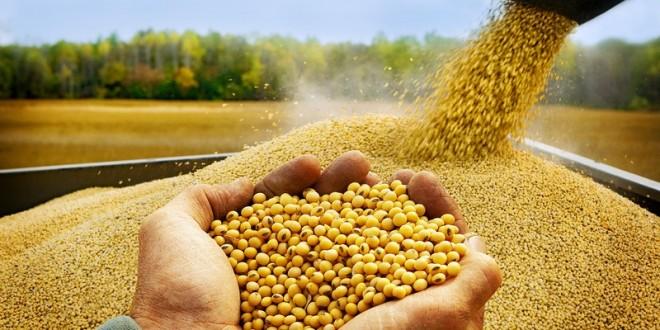 سم فروشان و وارد کنندگان، مخالف تولید محصولات تراریخته هستند/ تا سال 1400 گیاهی تولید می کنیم که از آب دریا استفاده کند/ هر کس ثابت کند تراریخته سرطان زاست، 50 میلیون تومان جایزه دارد