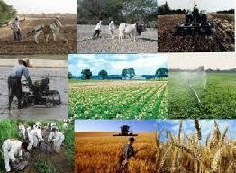 سود و کارمزد تسهیلات کشاورزان خسارت دیده بخشیده می شود