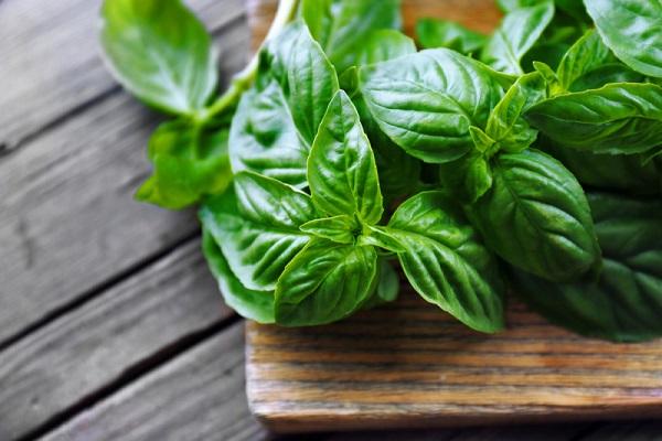 ریحان از گیاهان دارویی