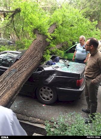مصدوم شدن یک زن براثر سقوط درخت در ساری