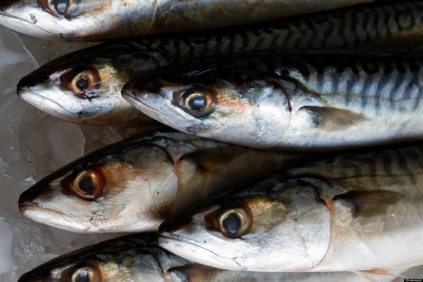 آیا جیوه موجود در ماهی در ابتلا به ALS نقش دارد؟