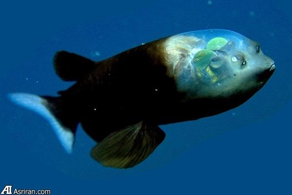 حیات بیگانه در اعماق آبهای اقیانوسی سیاره زمین