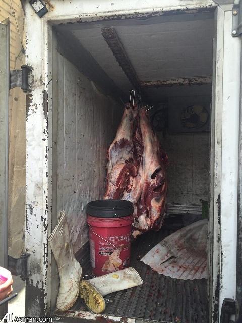 کلکسونی از تخلفات بهداشتی در برخی از واحد های عرضه قصابی و فروش گوشت مرغ  (+عکس)