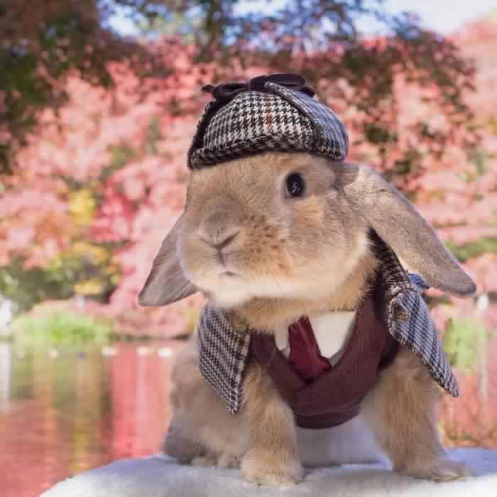 خوشتیپ ترین خرگوش جهان! (عکس)