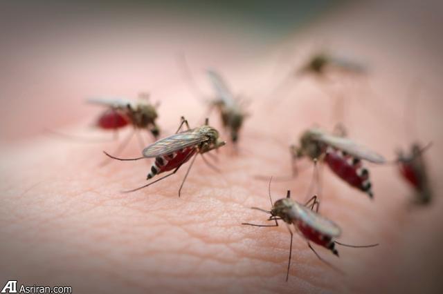 چرا پشهها برخی افراد را بیشتر نیش می زنند؟