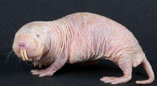 حیوان های چندش آور و عجیب کره زمین (+عکس)