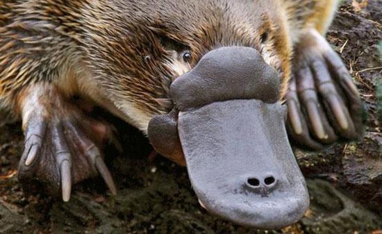 کدام حیوان با گوش غذا میخورد